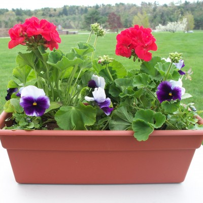 memorial-day-flower-box-e1428437769481